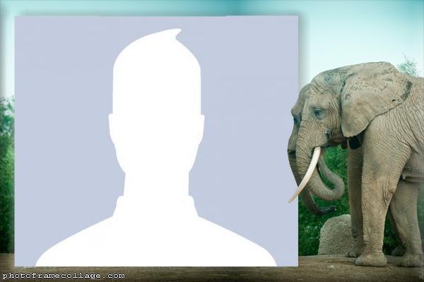 Elephants Photo Montage
