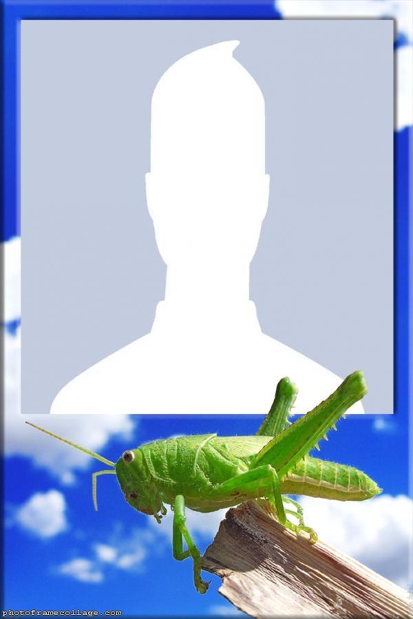 Cricket Photo Montage