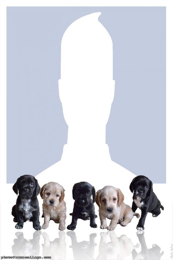 Five Puppies Photo Montage