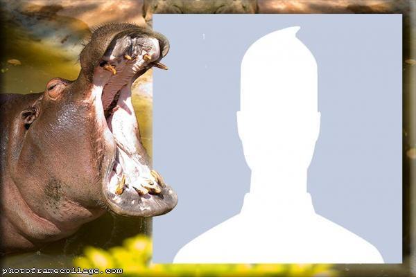 Hippopotamus Photo Montage