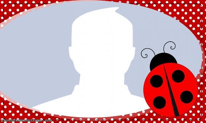 Insect Ladybug Photo Collage