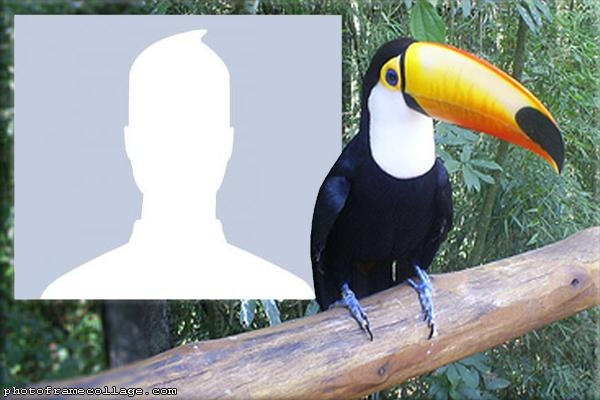 Toucan Photo Collage