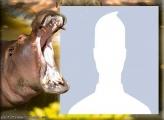 Hippopotamus Photo Montage