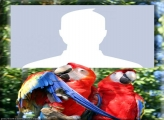 Red Macaws Photo Collage