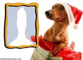 Santa Dressed Puppy