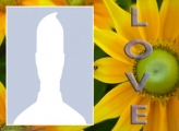 Sunflower Love Collage