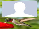 Hummingbird Photo Montage