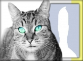 Gray-Eyed Cat Photo Collage